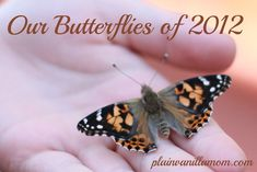 Raising Butterflies and lots of other butterfly related activities