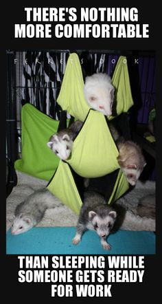 Cant have enough ferrets!?                                                                                                                                                      More