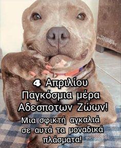 Dog Lovers, Pitbulls, Dogs, Animals, Friends, Animales, Amigos, Animaux, Doggies