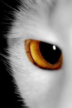 ZOOM IN. The essence of being is in the eyes.  We all say, beauty is in the eye of the beholder.  Perhaps these eyes see more beauty than we do.
