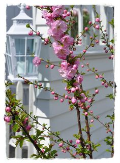 blossom by blossom...
