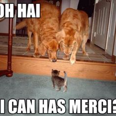 I can has mercy?
