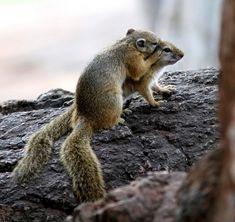 Squirrel secret