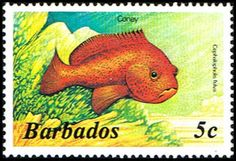 Barbados 642 Stamp  Coney Fish