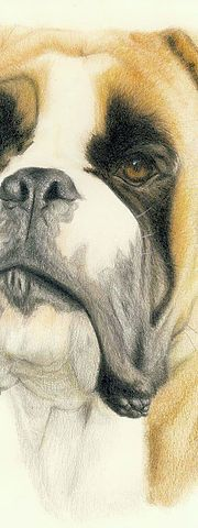 University professor and professional travel guide in Japan for English, French and Spanish speakers. University Professor, Japan, Illustration, Dogs, Animals, Blond, Animaux, Doggies, Animales