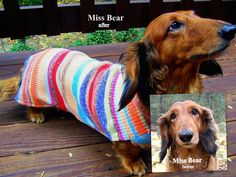 Dachshund Sweaters by WarmWeenies, Handmade to Fit ~ for Chilli