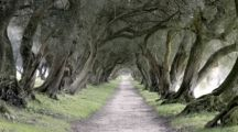 ruta de la camelia, parques y jardines de galicia, visitas a pazos de galicia