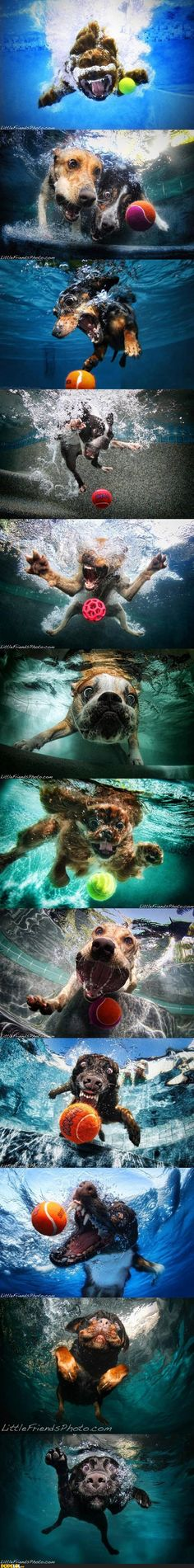 haha so funny! dogs jumping into water chasing a ball action shot!