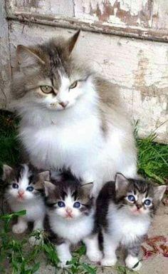 12d0d9702a6 JTheGr81 - Cats -Jannice Kesterson Glover Beautiful Kittens