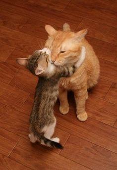Abraza a tus Seres Queridos para que ambos podáis sentiros OK.