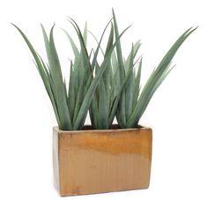 Dalmarko Designs Aloe Plant in Clay Floor Planter