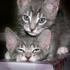 GinGin's Kittens