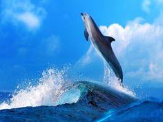 Delfín saltando sobre las olas del mar