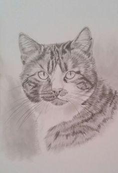 Katzen - tierportraits-mit-herzs Webseite!