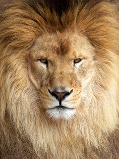 magnificent creatures