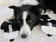 Hand knit Border Collie mittens gloves in black and by AmeBa77, $42.00