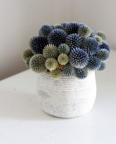 Echinops flowers from DriedDecor.com