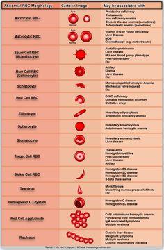 Abnormal RBC Morphology