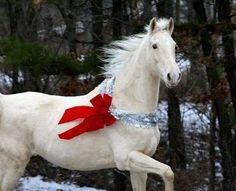 Pretty gray horse with Christmas decorations!