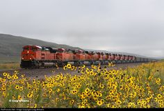 Back in 2009 the BNSF was taking delivery of new 6300's series units. Here a westbound coal train has 11 units, 7 of them brand new units probably heading to Alliance for setup. The train passes the colorful wildflowers that grown in August thru out the Nebraska Sandhills. This train came out of Eola, IL, off the EJ&E, and is bound for Decker Mine, MT, for loading.