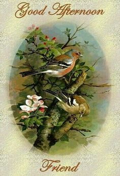 ᐅ Top 68 Good Afternoon images, greetings and pictures for WhatsApp Bird Pictures, Pictures To Paint, Good Afternoon Quotes, Afternoon Messages, Evening Greetings, Vintage Birds, Botanical Prints, Bird Art, Wonderful Images