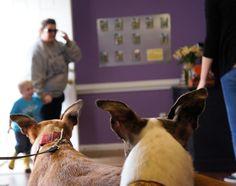 Adopted Greyhounds!