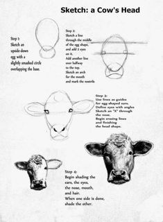 How to draw a realistic cow step by step pails of paint art lesson the face of a cow art lessons Cow Drawing, Drawing Faces, Drawing Ideas, Cow Painting, Painting & Drawing, Cow Sketch, Art Sketches, Art Drawings, Cow Face