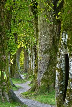 New nature forest trees mystic 39 ideas Nature Images, Nature Photos, Natures Path, Forest Wallpaper, Nature Tree, Photo Tree, Phone Backgrounds, Pathways, Belle Photo