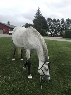 Nice boy just grazing Most Beautiful Horses, Pretty Horses, Animals And Pets, Cute Animals, Majestic Horse, Lovely Creatures, Horse Stables, Horse Pictures, Horse Photography