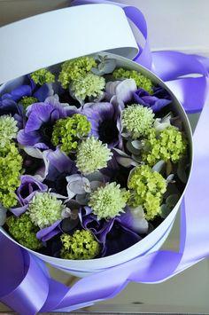 box flower anemone