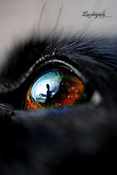 Dogeye © Copyrighted by linnfotografi.blogg.no