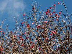 Benved - fantastiske blomster her i november - ved Fløjstrup Strand.