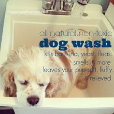 199 best dog wash mud room images on pinterest laundry room all natural doggy wash ring around the rosies solutioingenieria Choice Image