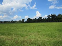 This family owned farm contains roughly 93 acres, comprised of mainly improved hay meadows and conveniently located approx. 10 miles from Lufkin and Sam Rayburn Reservoir! The farm offers fencing & cross fencing for livestock, 4 ponds, 2 barns, a 3 bed/1 bath farm house, and plenty of road frontage for the potential of development. Call today to view this beautiful property.