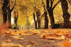 Trees, Avenue, Autumn, Away, Mood