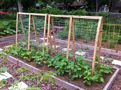 Trellises are essential for vining plants, such as pole beans, peas, and some varieties of squashes or cucumbers