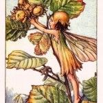 Hazelnut Flower Fairy