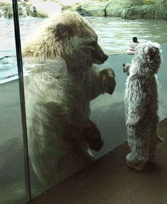 Urso polar se encanta com criança fantasiada de urso - Fernando Moreira: O Globo