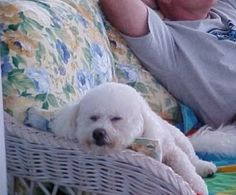 This looks like my baby girl, Belle.  Miss her sleeping with me on the couch...