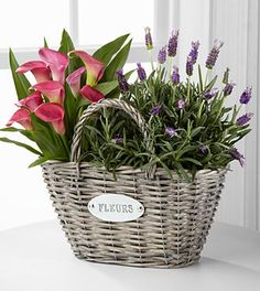 The Blooming Embrace Plant Duo bursts with spring's beauty and fresh sensibilities. A stunning pink calla lily plant sits sweetly next to a fragrant lavender plant gorgeously captured together in a willow purse basket. Fresh Flowers, Beautiful Flowers, Garden Basket, Easter Flowers, Flower Boxes, Calla Lily, Container Gardening, Floral Arrangements, Plants