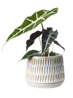 Mini Grønnplante mix Høyde 7 cm | Plantasjen Grenada, Planters, Mini, Granada, Planter Boxes, Plant, Flower Pots, Pot Holders, Flower Planters