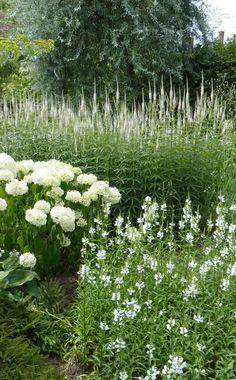 Wild white flowers and hydrangeas