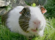 smile :) you're a pig
