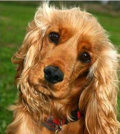 Perros - Comunidad - Google+
