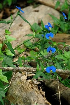 Blue by Karen Roie Forest