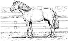 Horse stands at fence Coloring page