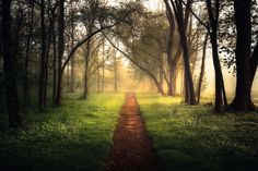 A Walk In The Woods by Mark Jones, via 500px.