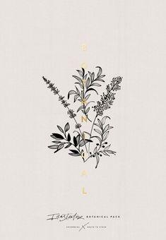 FREE Illustrator Botanical Pack by Corina Nika Botanical Drawings, Botanical Art, Flower Drawings, Floral Illustrations, Illustration Art, Illustration Botanique, Illustrator, Tatoo Art, Grafik Design