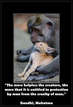 119 Best Stuff To Inspire Images Animal Rescue Animal Rights Cubs
