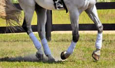 Improve Your Ride: Sitting the Canter or Lope